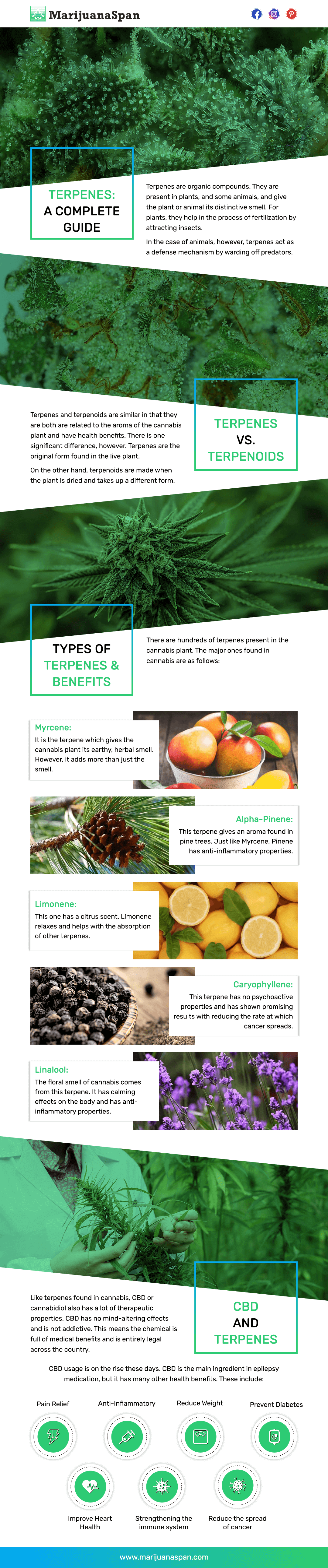 Terpenes Complete Guide Infographic