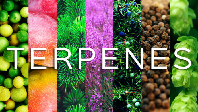 Benefits of Terpenes