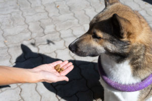 Dosage of CBD for Dogs